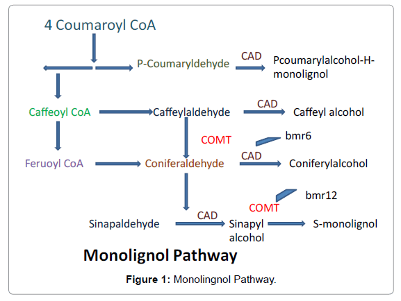 Agrotechnology-Monolingnol-Pathway
