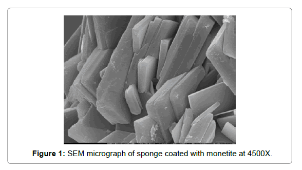 Bioceramics-Development-SEM-micrograph