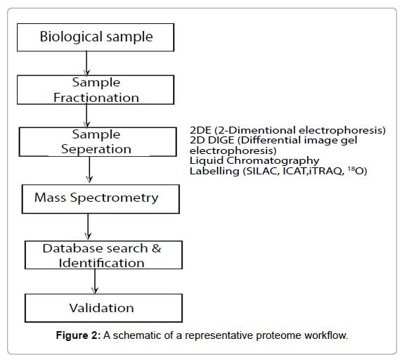 Data-Mining-Genomics-schematic-representative-proteome-workflow