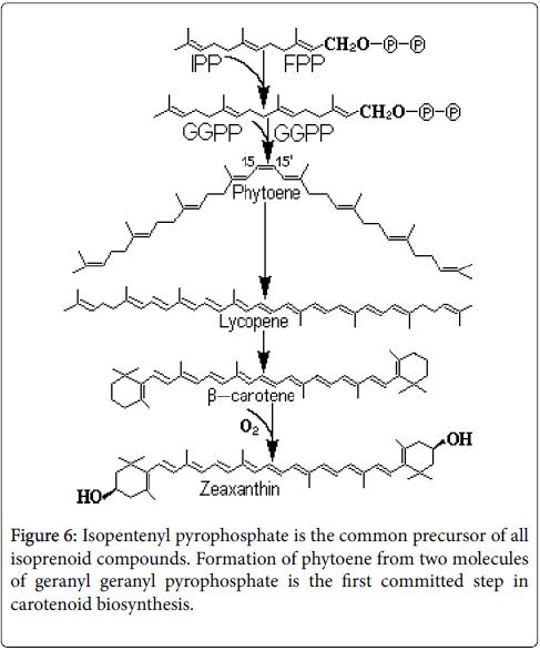 Ecosystem-Ecography-Isopentenyl-pyrophosphate