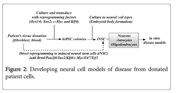 Medicine-Dental-Science-Developing-neural-cell-models-diseases