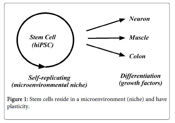 Medicine-Dental-Science-Stem-cells-reside-microenvironment
