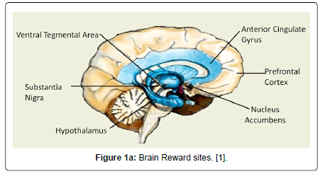 addiction-research-experimental-Brain-Reward