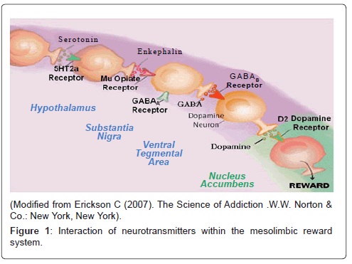 addiction-research-experimental-mesolimbic-reward