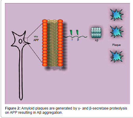 addiction-research-experimental-secretase-proteolysis