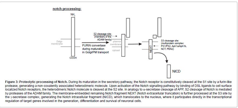 addiction-research-experimental-secretory-pathway