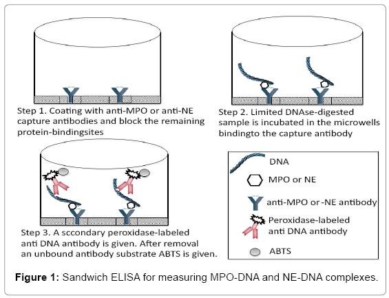 advanced-techniqes-biology-MPO-DNA
