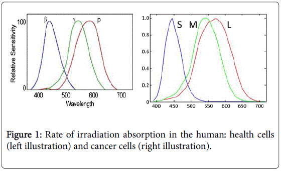 advances-cancer-prevention-irradiation-absorption
