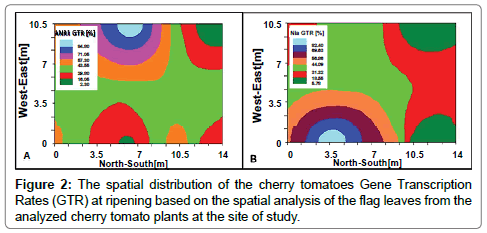 advances-crop-science-effect-cherry-tomatoes