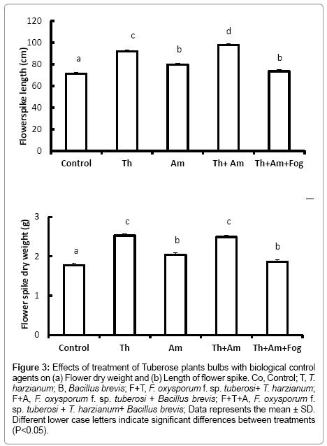 advances-crop-science-technology-Tuberose-plants