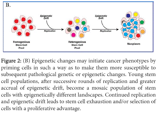 aging-science-initiate-cancer-phenotypes