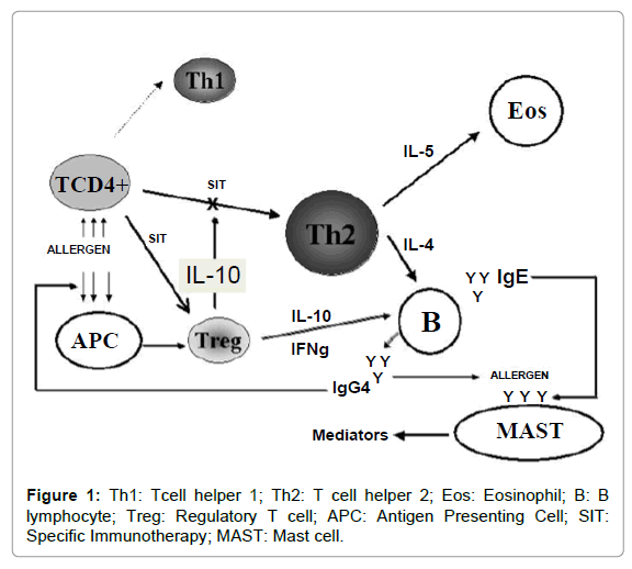 allergy-therapy-Tcell-helper