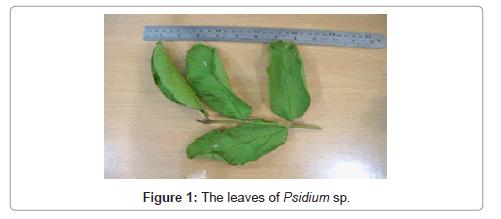 alternative-integrative-medicine-Psidium-sp