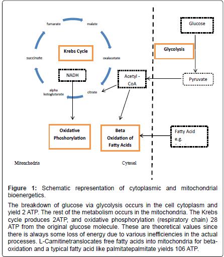 alzheimers-disease-parkinsonism-cytoplasmic-mitochondrial