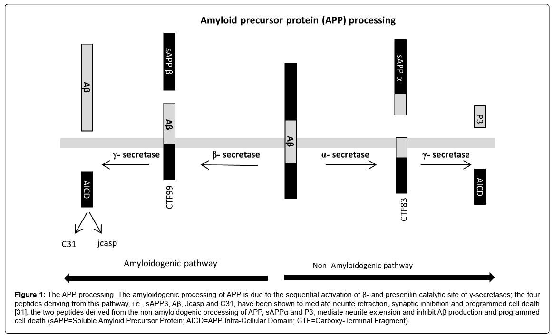 alzheimers-disease-parkinsonism-mediate-neurite