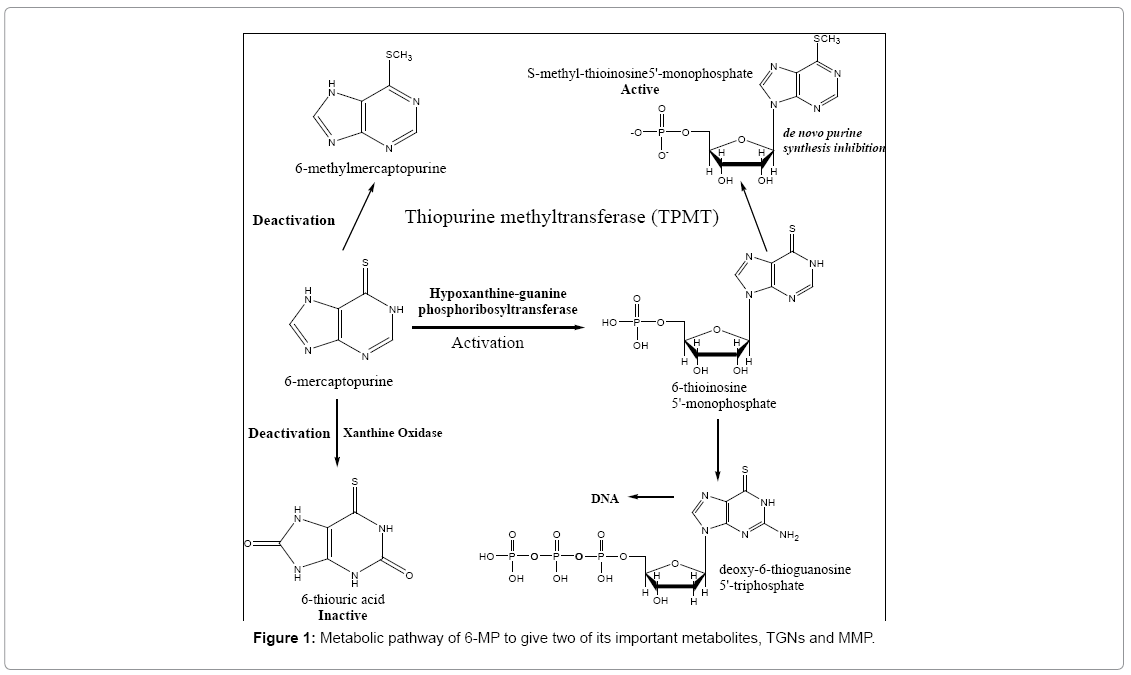 analytical-bioanalytical-techniques-Metabolic-pathway