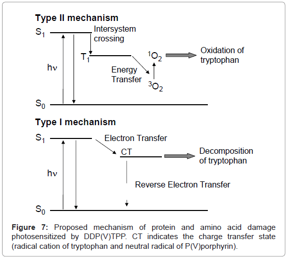 analytical-bioanalytical-techniques-Proposed-mechanism-protein