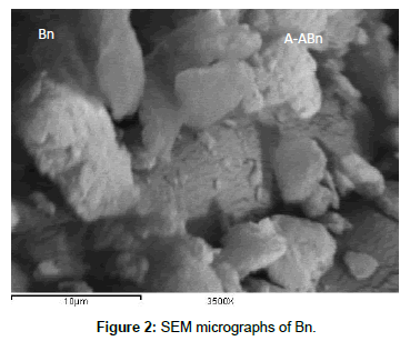 analytical-bioanalytical-techniques-SEM-micrographs