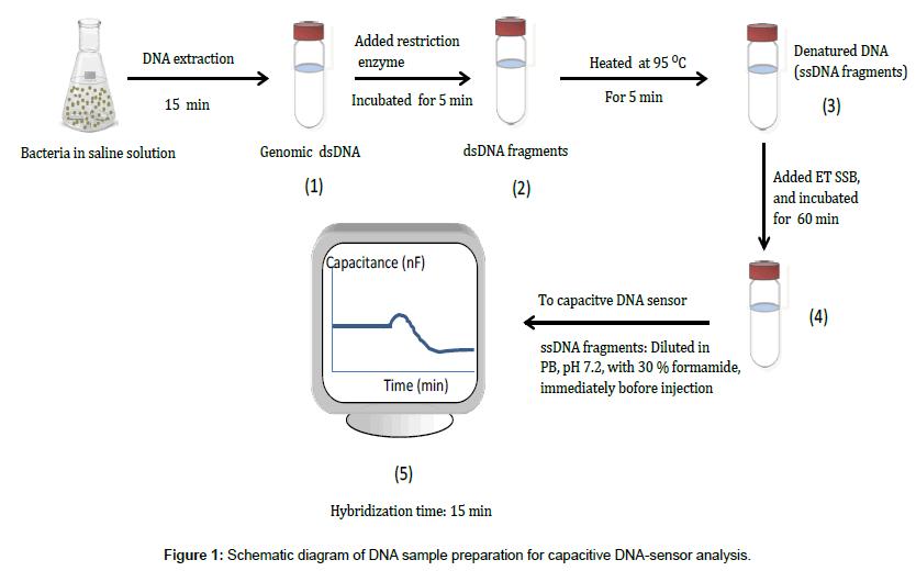 analytical-bioanalytical-techniques-Schematic-diagram