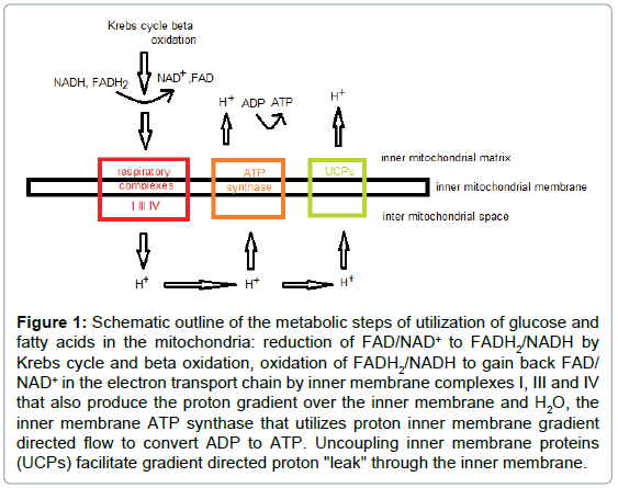 analytical-bioanalytical-techniques-Schematic-outline-metabolic