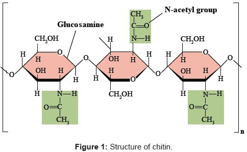analytical-bioanalytical-techniques-Structure-chitin