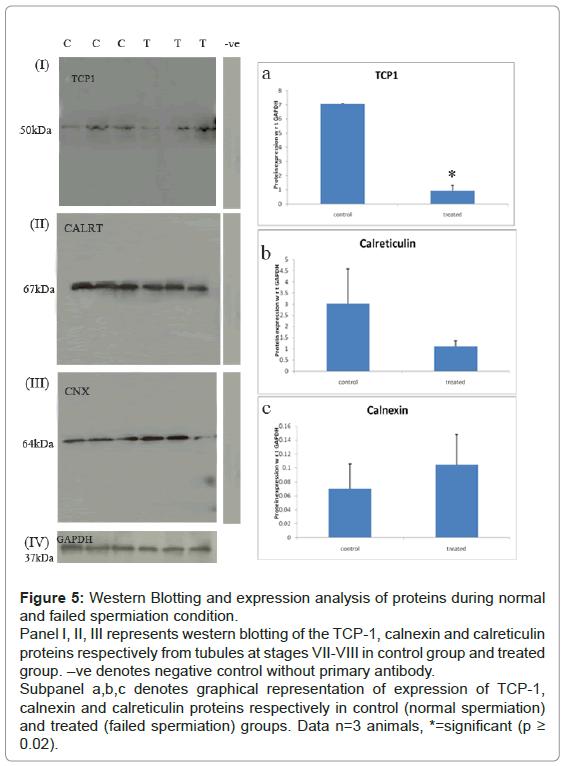 analytical-bioanalytical-techniques-Western-Blotting-spermiation