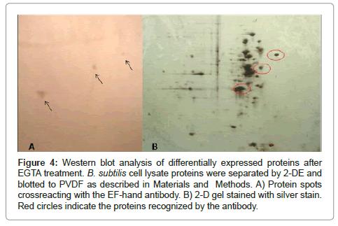 bioanalytical-techniques-Western-blot-analysis