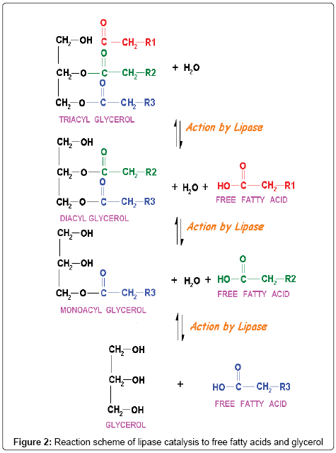 analytical-bioanalytical-techniques-lipase-catalysis