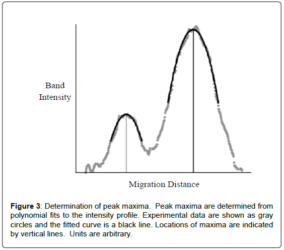 analytical-bioanalytical-techniques-maxima-polynomial-intensity