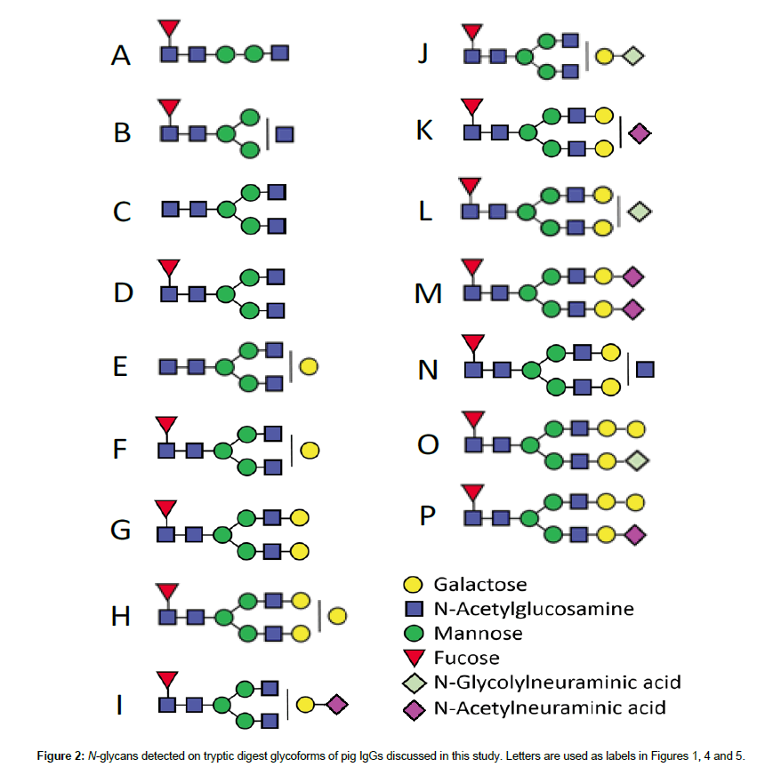 analytical-bioanalytical-techniques-tryptic-digest-glycoforms