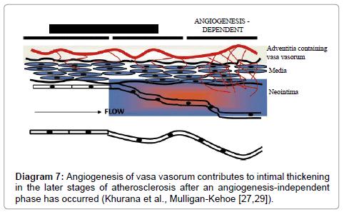 anatomy-physiology-Angiogenesis