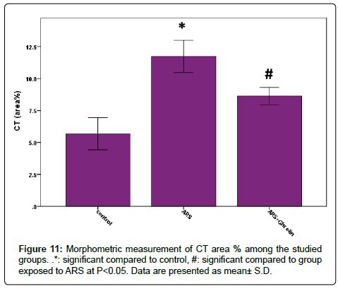 anatomy-physiology-Morphometric-measurement