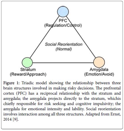 anatomy-physiology-Triadic-model