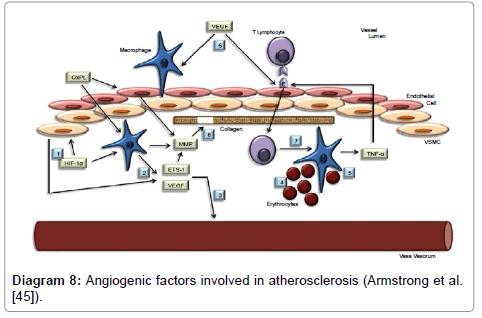anatomy-physiology-atherosclerosis