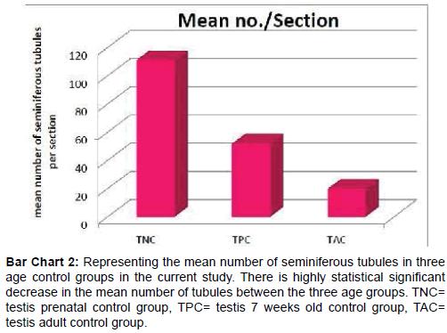 Developmental Characteristics of Rat Testicular Tissue and the ...