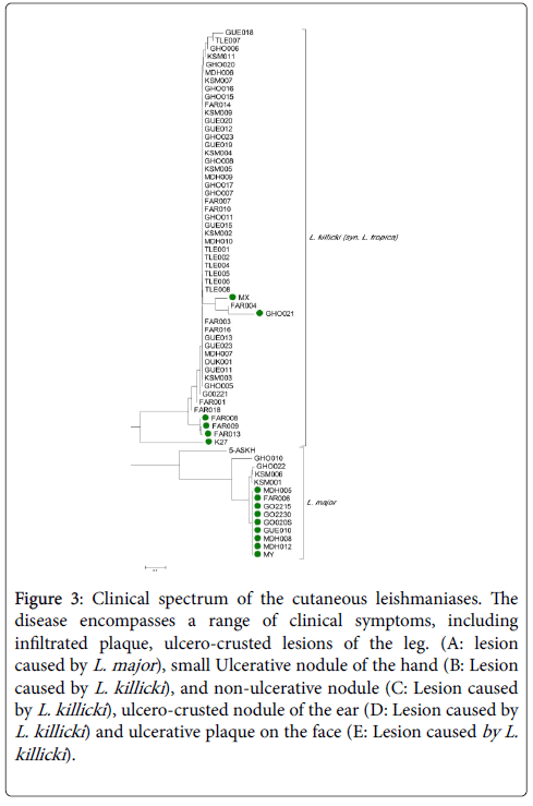 genetic association between microsatellite loci and The value of some corsican sub-populations for genetic association the non-random allelic association between pairs of microsatellite loci was tested by an extension of fisher exact test we used the multiallelic normalized disequilibrium coefficient d' between each marker loci.