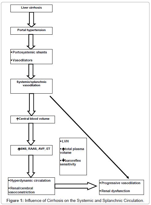 anesthesia-clinical-Splanchnic-Circulation