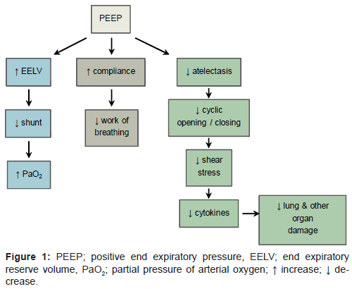 The Use Of Intraoperative Positive End Expiratory Pressure Omics