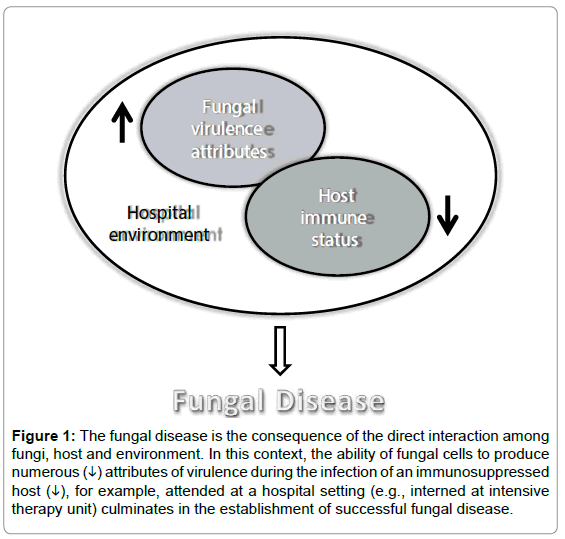 antimicrobial-agents-The-fungal-disease-consequence