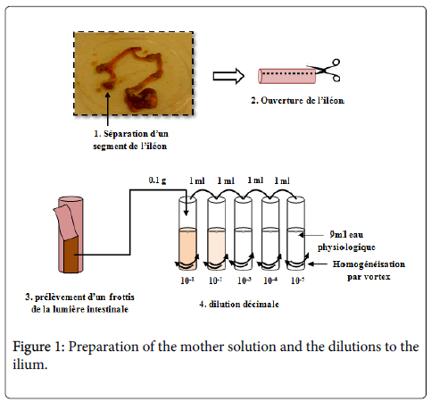 antimicrobial-agents-mother-solution