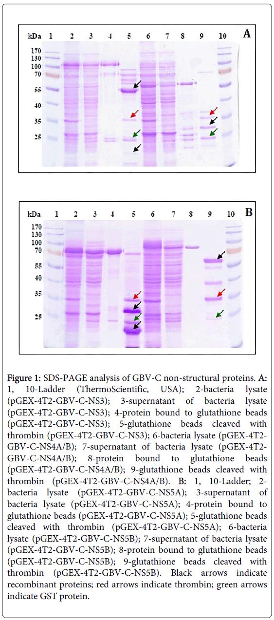 antivirals-antiretrovirals-analysis-structural-proteins