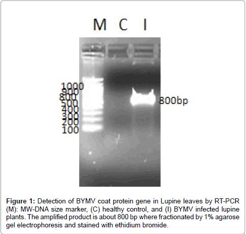 antivirals-antiretrovirals-coat-protein