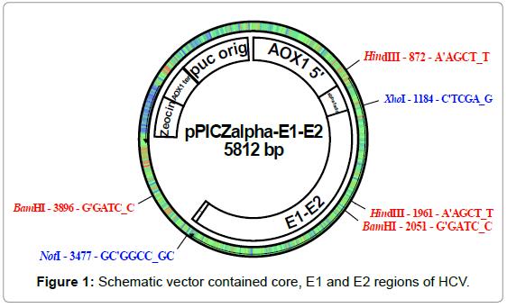 antivirals-antiretrovirals-schematic-vector