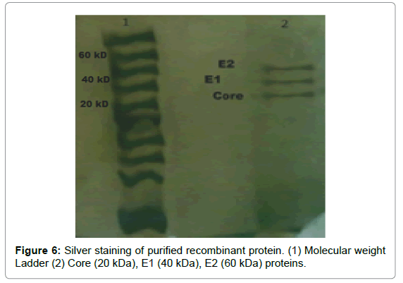 antivirals-antiretrovirals-silver-staining