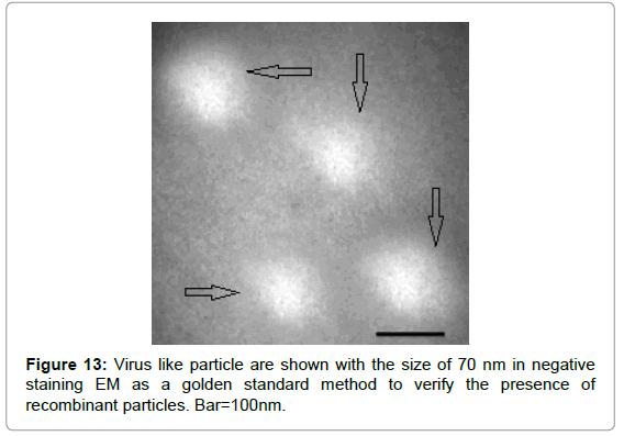 antivirals-antiretrovirals-virus-particle