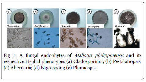 endophytic fungi+research papers From pharmaceutical industries plants are also used in paper industries, timber industries and textile industries  an effort was made to use endophytic fungi in a.