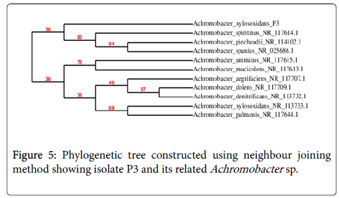 applied-microbiology-Phylogenetic-tree
