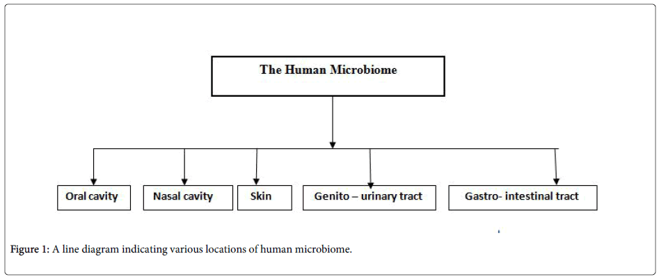 Role Of Microbes In Human Health Appliedmicrobiologyhumanmicrobiome Business Plan Assignment Help also Argumentative Essay Proposal  Essay On Health Care Reform