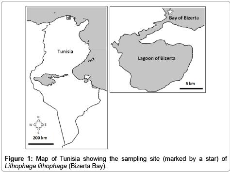 aquaculture-research-development-Tunisia-sampling