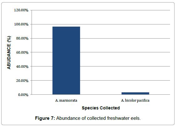 aquaculture-research-development-abundance-eels